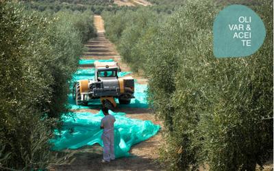 Precios de aceite de oliva en origen